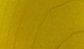 Yellow +$8